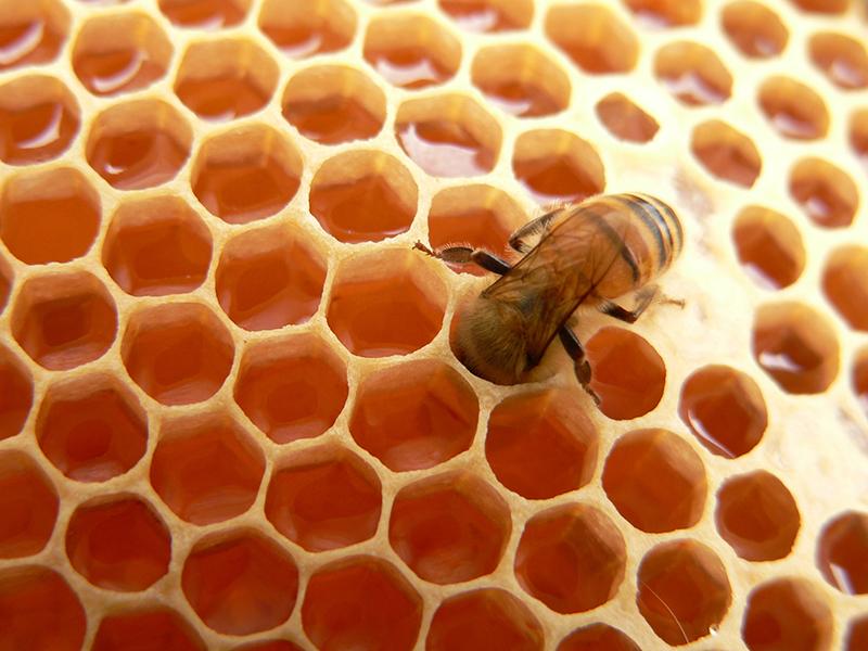 Para-que-serve-a-cera-fabricada-pelas-abelhas